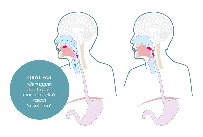 den orala fasen i sväljningsprocessen.